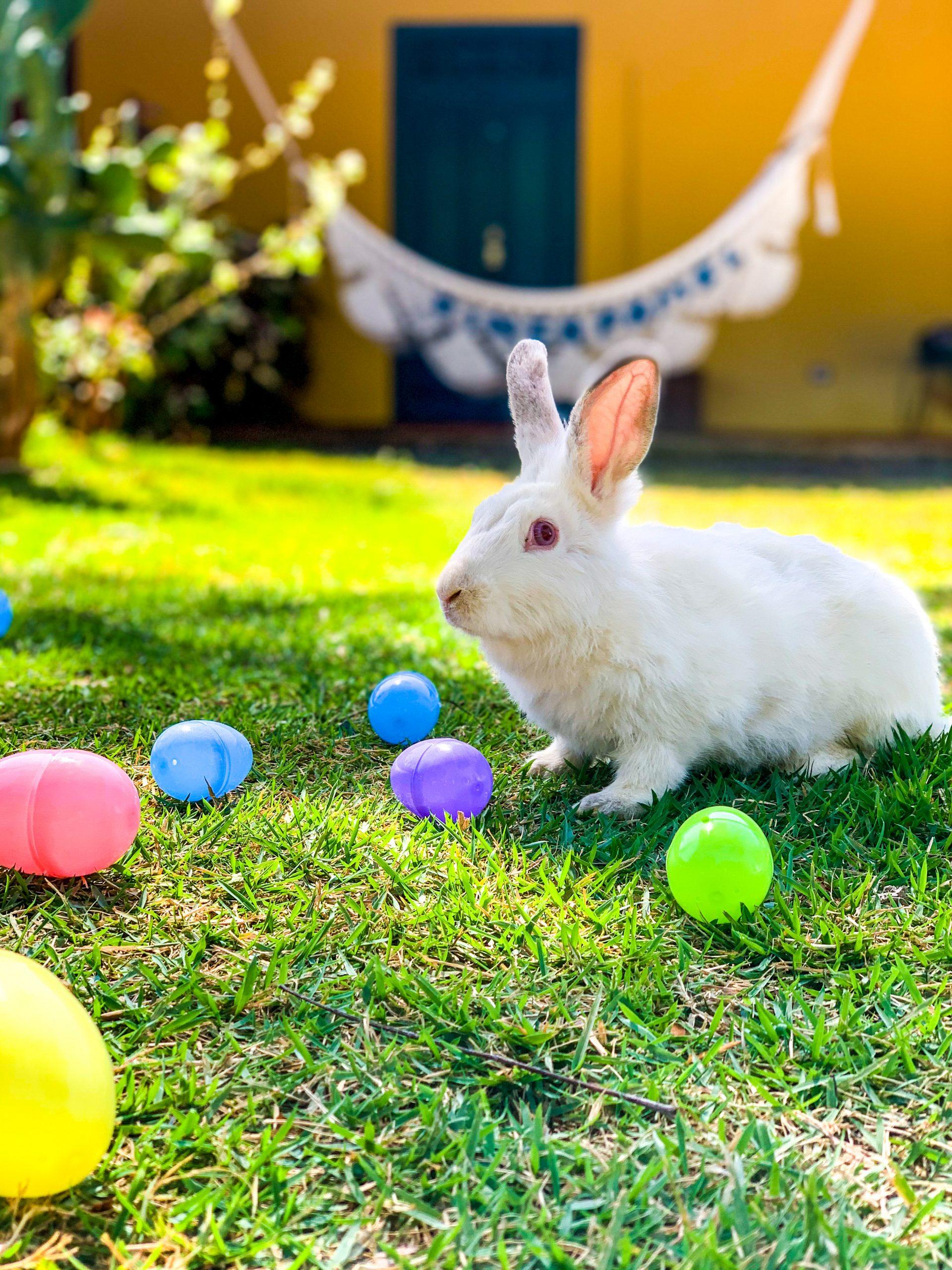 Pascua en Finca Pamel